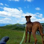 Trail Etiquette for You and Your Dog