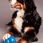 Benefits of Dog Kongs & Recipes