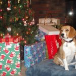 Top Holiday Tips for Dogs