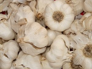 garlic toxic for dogs