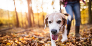 Tips for hiking with your dog in Saratoga County